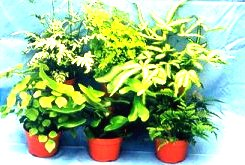 "4"" Exotic Fern Assortment"