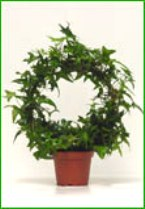 "4"" Ivy Wreath"